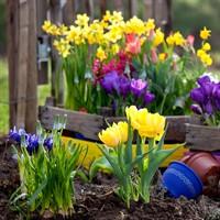 Луковичные и корневищные цветы