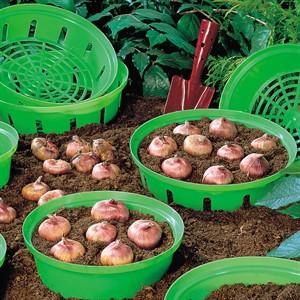 Корзины для луковичных