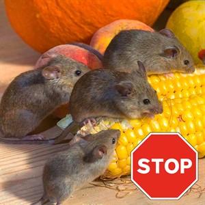 Средства защиты от крыс и мышей