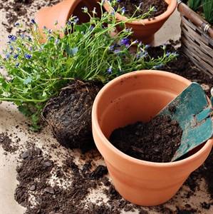 Грунты и дренаж для комнатных растений