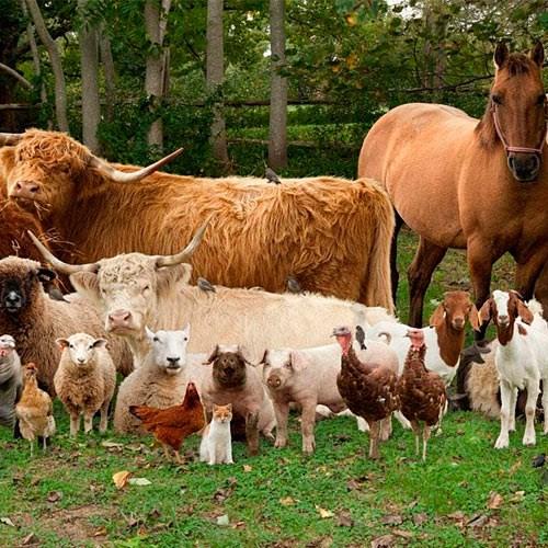 Для сельскохозяйственных животных и птиц