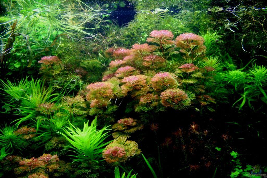 Выращивание растений в аквариуме