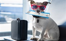 Перевозка домашних животных в самолёте
