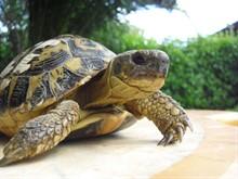 Впадают ли в спячку домашние черепахи?