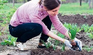 Что полезного посадить диабетику у себя в огороде?