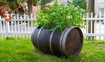Выращивание картофеля в бочке и контейнере