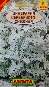 Цинерария Серебристо-снежная