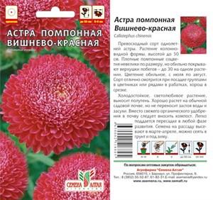 Астра Помпонная вишнево-красная