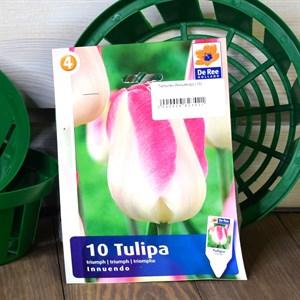 Тюльпан Йннуйендо (10)