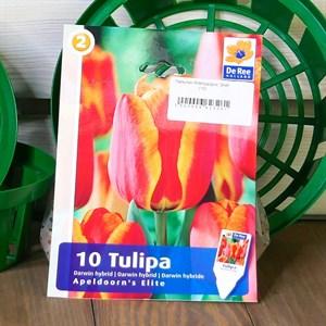 Тюльпан Апельдорнс Элит (10)