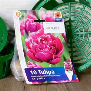Тюльпан Маргарита (10)