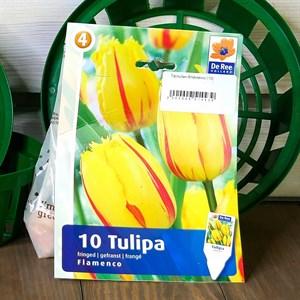 Тюльпан Фламенко (10)