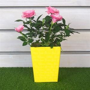 Коробка для цветов 9,3*12*15