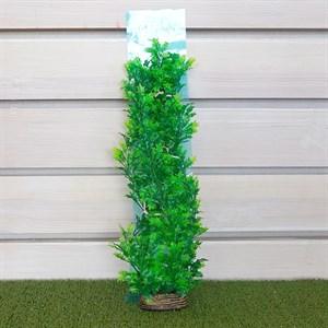 Растение ТРИТОН пластмас. 46см 4665