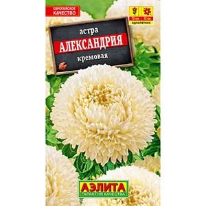 Астра Александрия кремовая