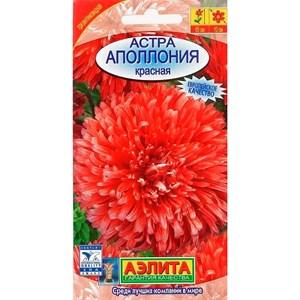 Астра Аполлония красная