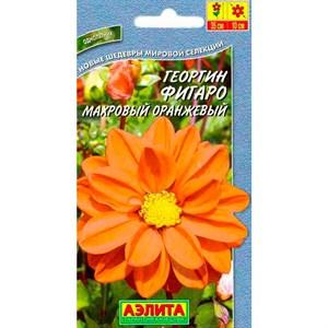 Георгина Фигаро оранжевая