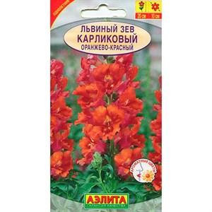 Львиный зев карликовый оранжево-красный