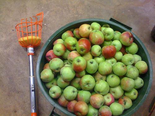 Для снятия яблок своими руками 541