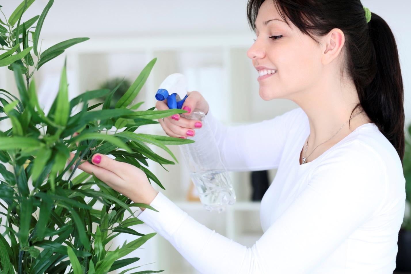 Какие цветы полезны в доме а какие нет